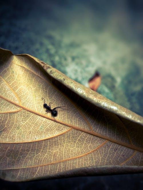 Gratis lagerfoto af en, ferskvand, tørt blad