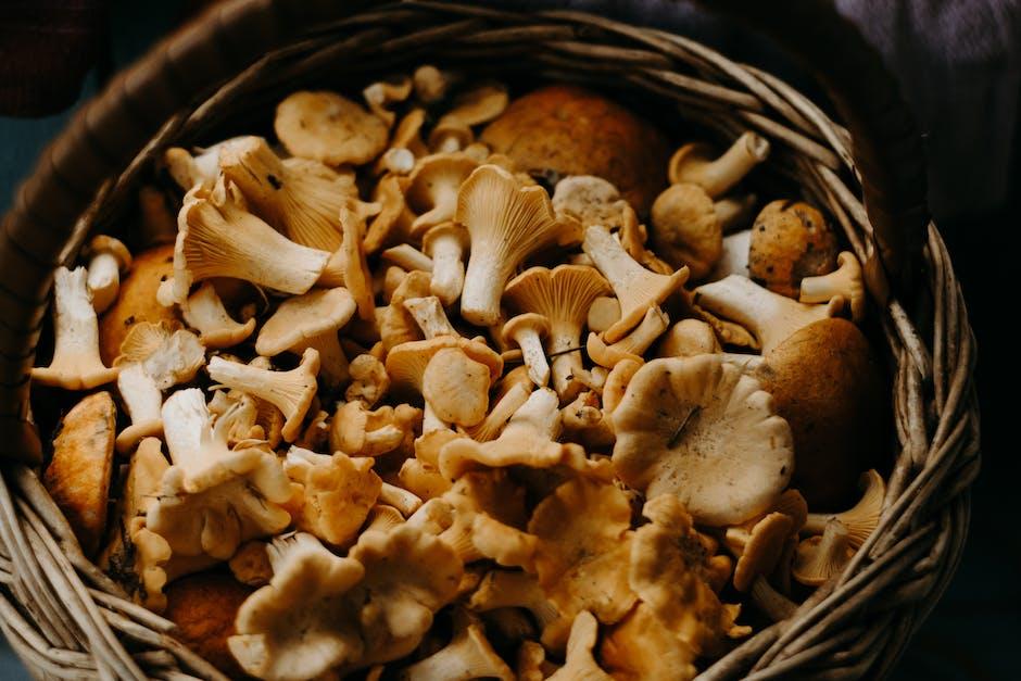 What makes porcini mushrooms molto buoni