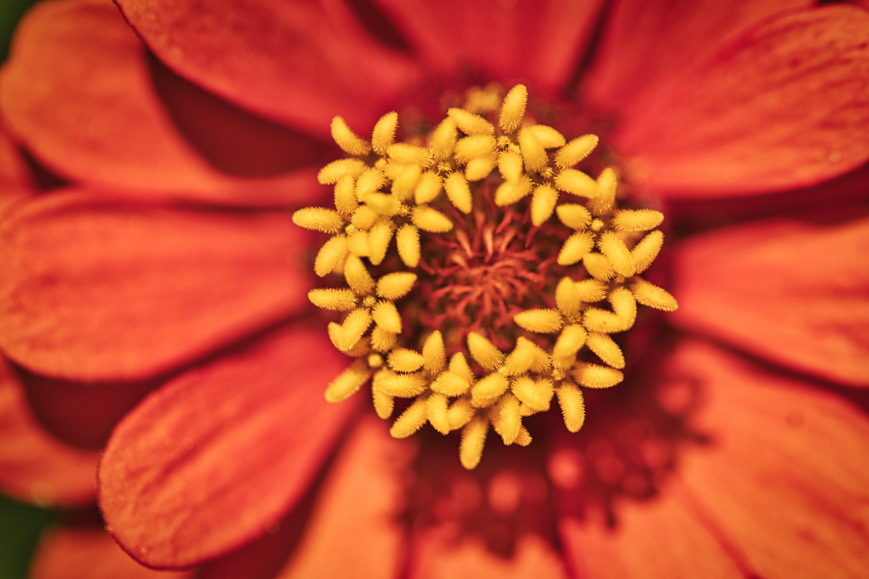 Free stock photo of flower, macro