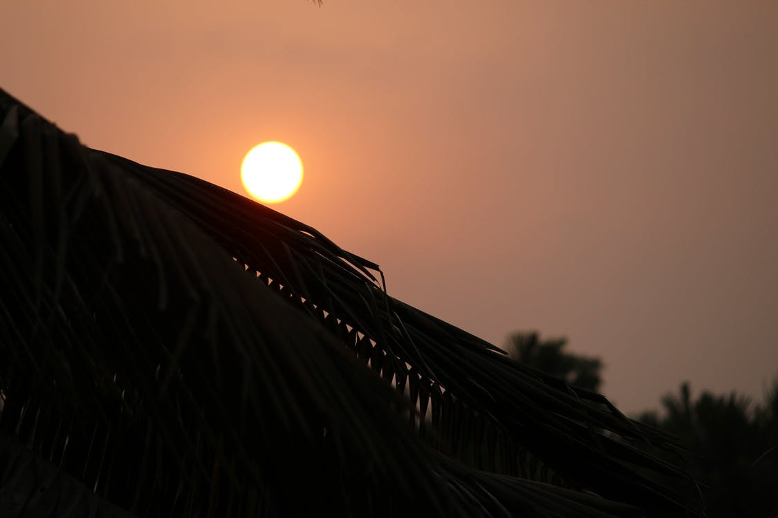 Ingyenes stockfotó este, esti nap, kókuszfa témában