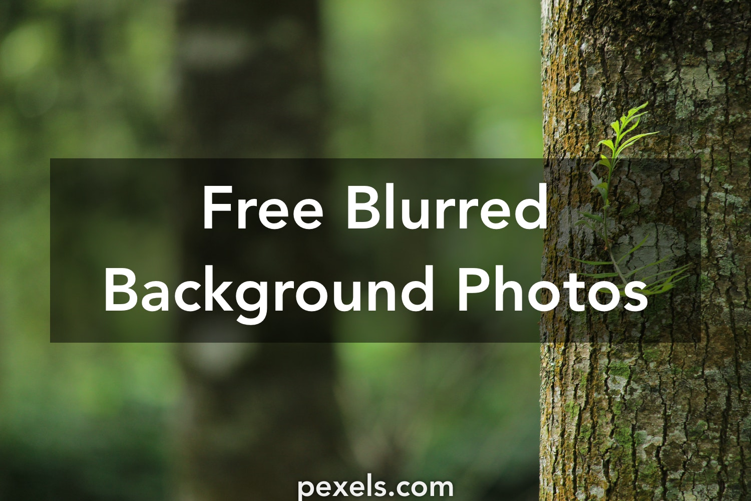 1000 Amazing Blurred Background Photos Pexels Free Stock Photos