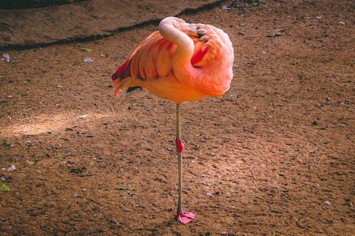 균형, 기중기, 깃털, 동물의 무료 스톡 사진