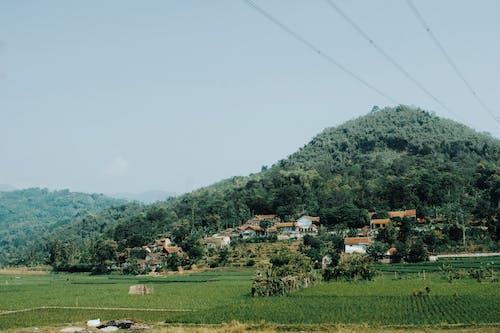 Photos gratuites de agriculture, arbres, câbles électriques, campagne