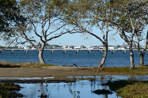 Free stock photo of brisbane river, trees