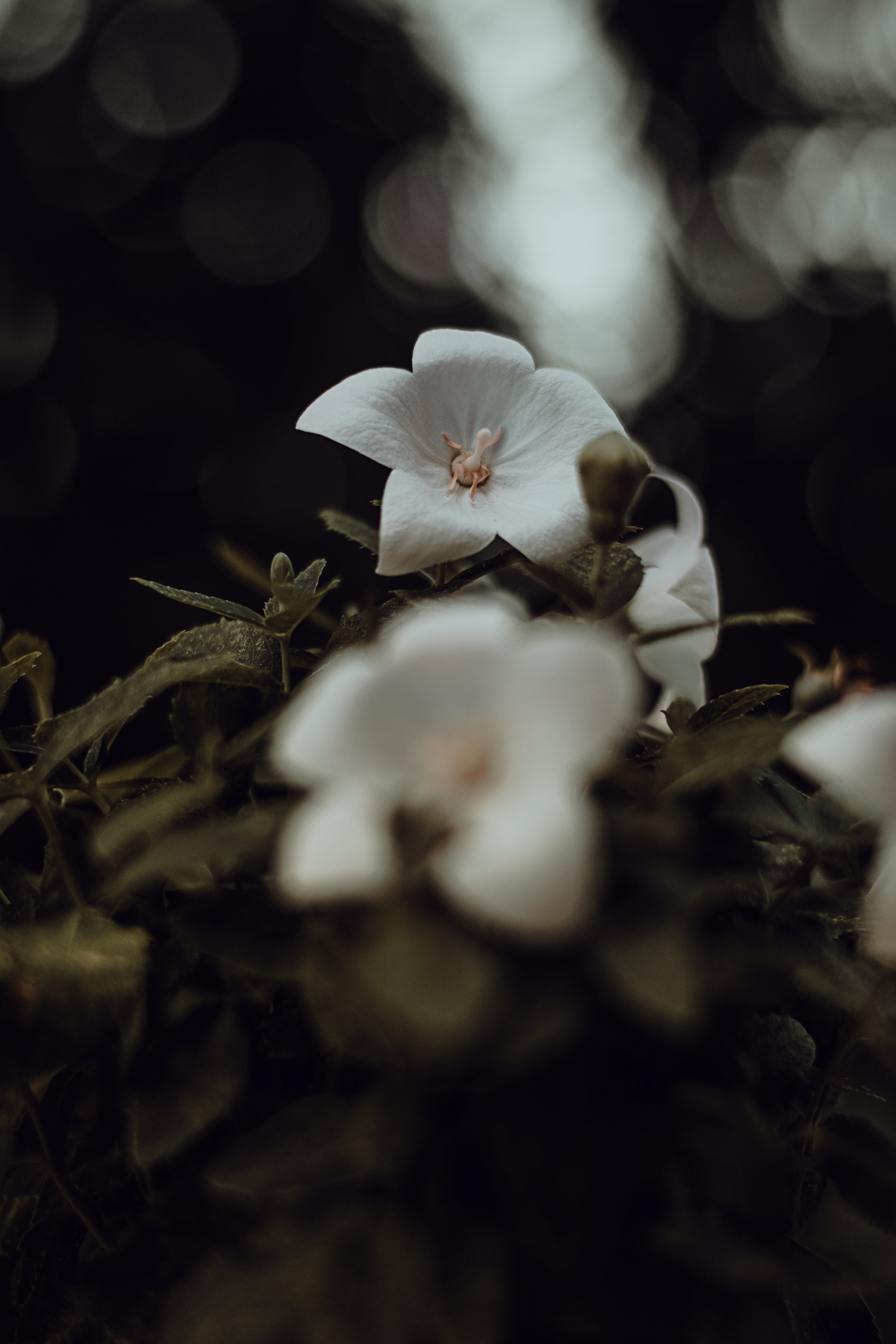 Close-up Photography of White Flower