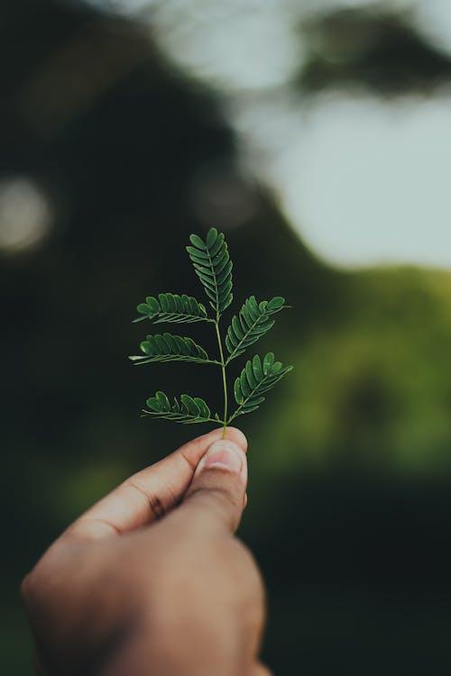 Ảnh lưu trữ miễn phí về chụp ảnh thiên nhiên, hệ thực vật, mơ hồ, môi trường