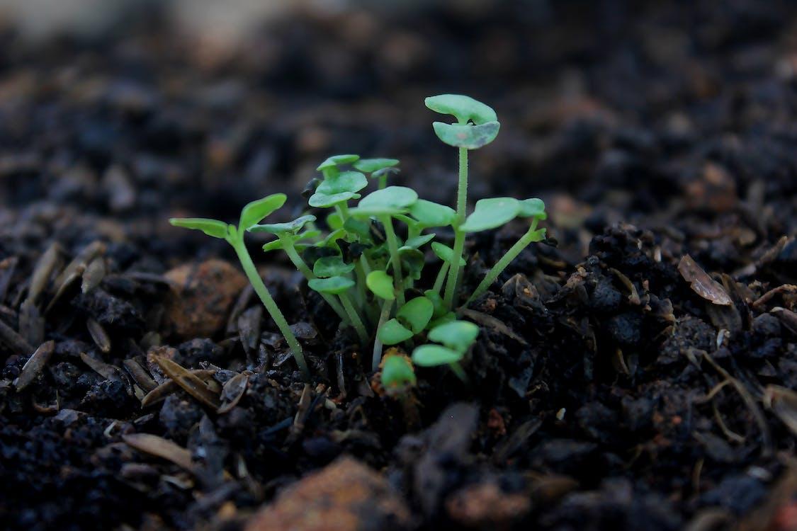 การเจริญเติบโต, ดิน, ต้นไม้