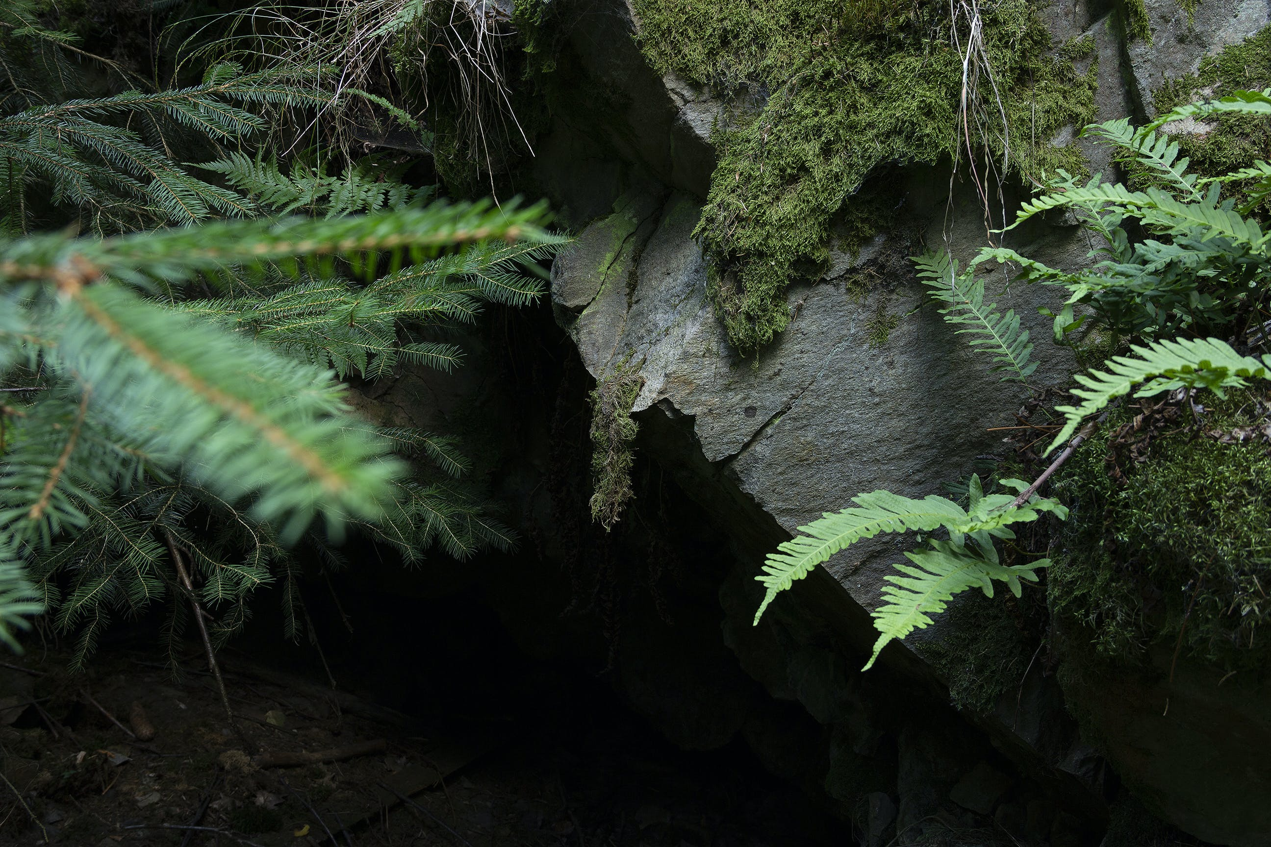 Photography of Fern Plants