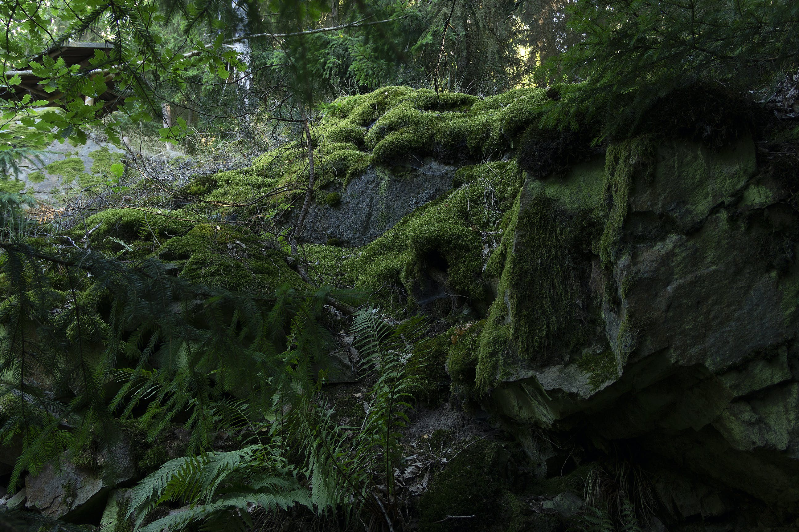 Photo of Mossy Rocks and Fern Plants