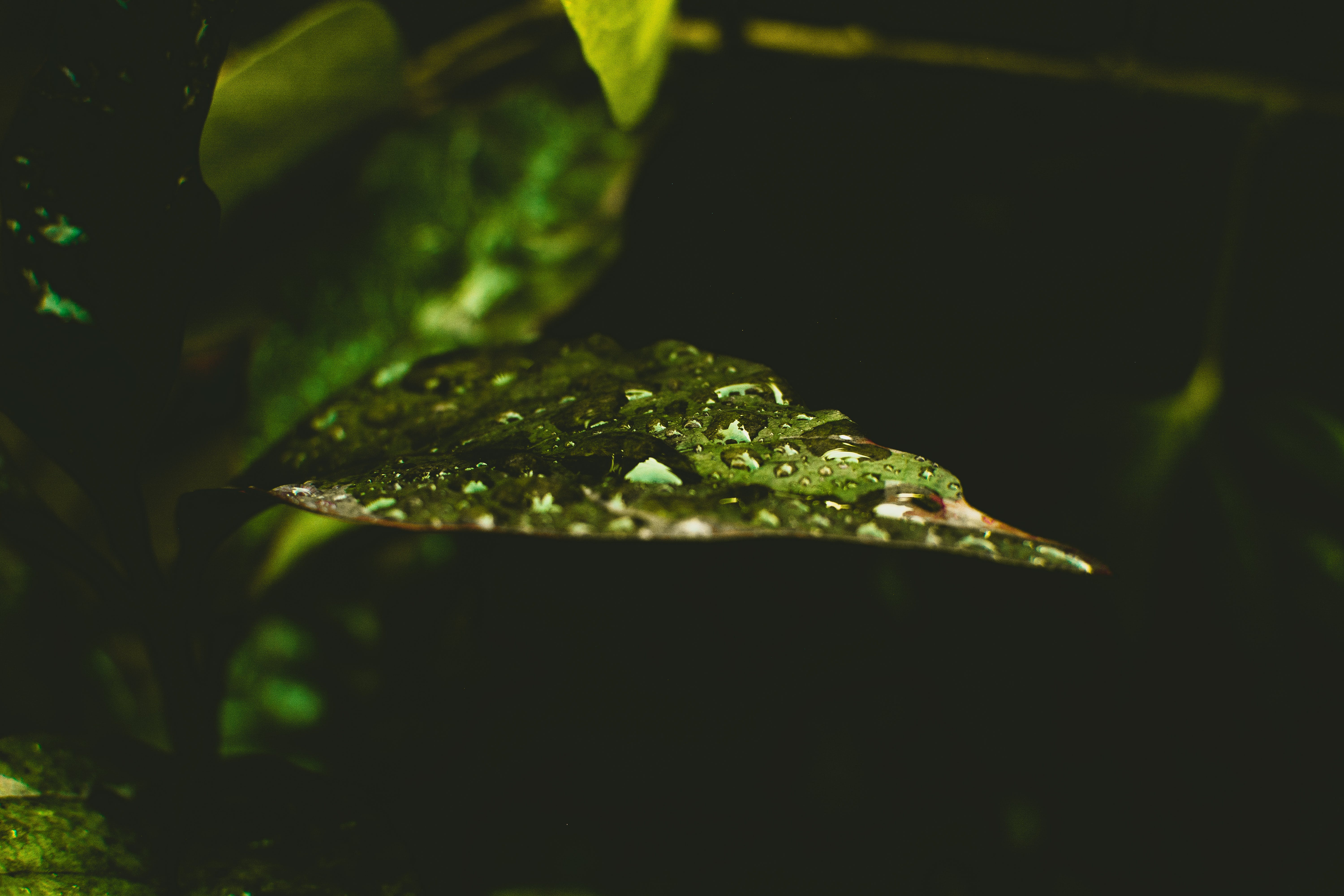 Water on Top of Green Leaf