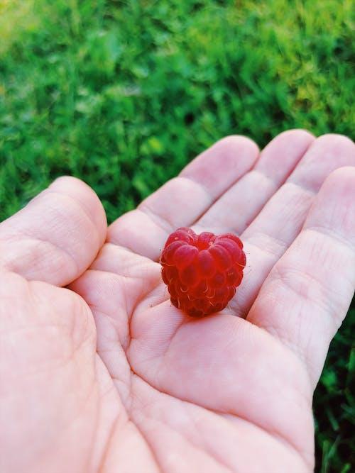 Free stock photo of framboesa, rasberry, summer, treats