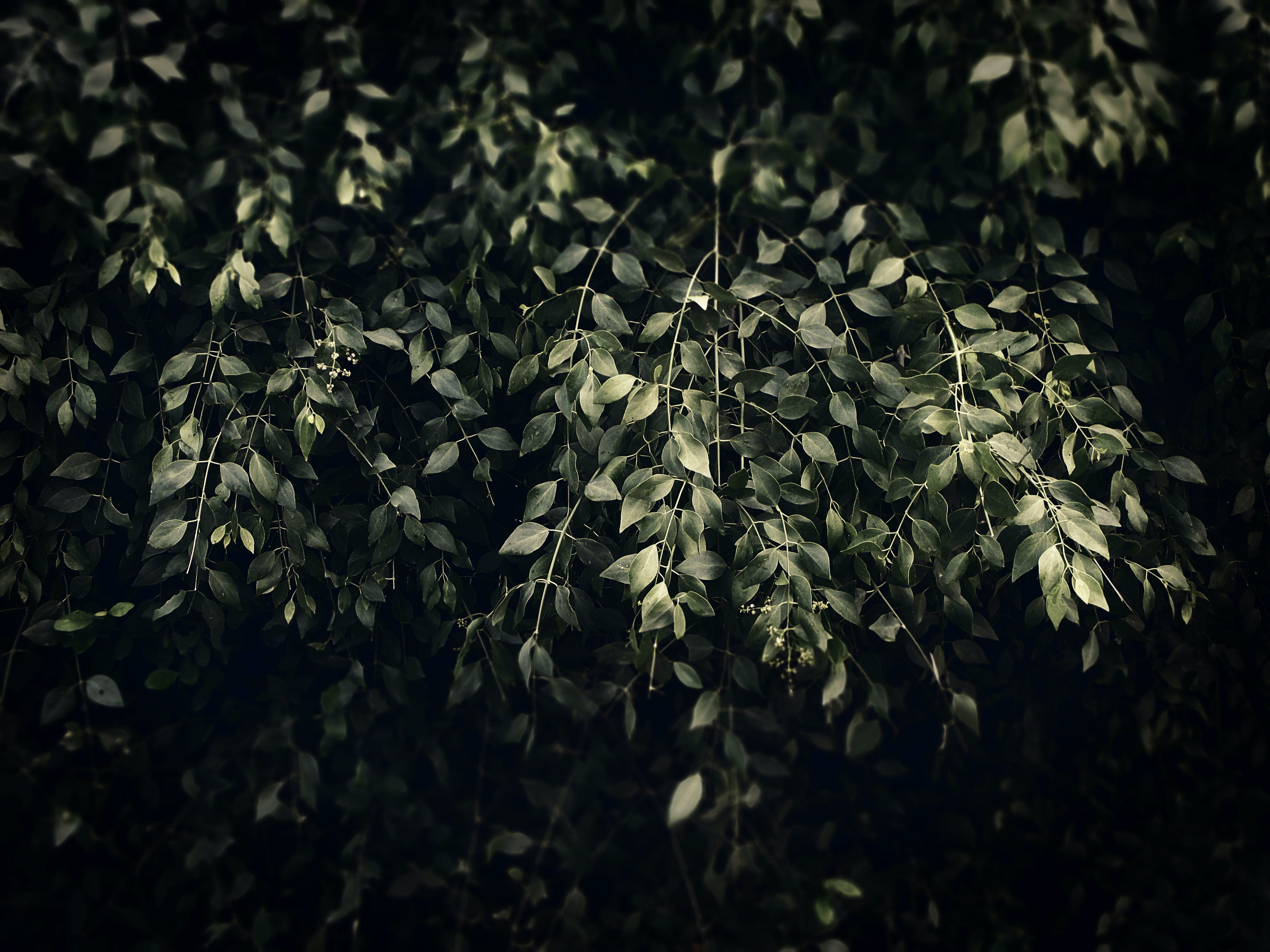 Shallow Focus Photography of Green Leaves during Low Light Photography