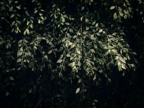 Ảnh lưu trữ miễn phí về chi nhánh, hệ thực vật, màu, màu xanh lá