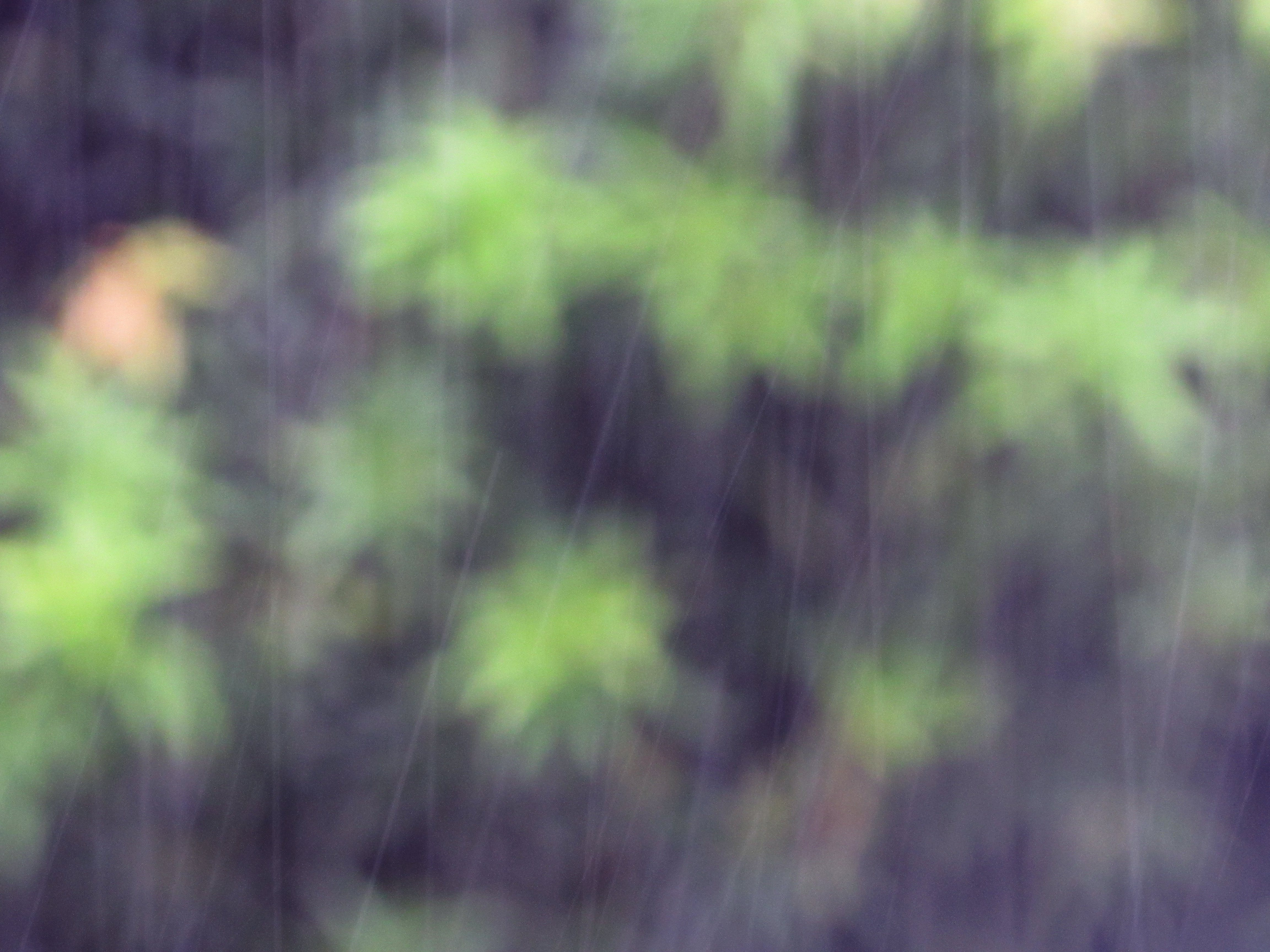 Free stock photo of abstract, leaves, rain, texture