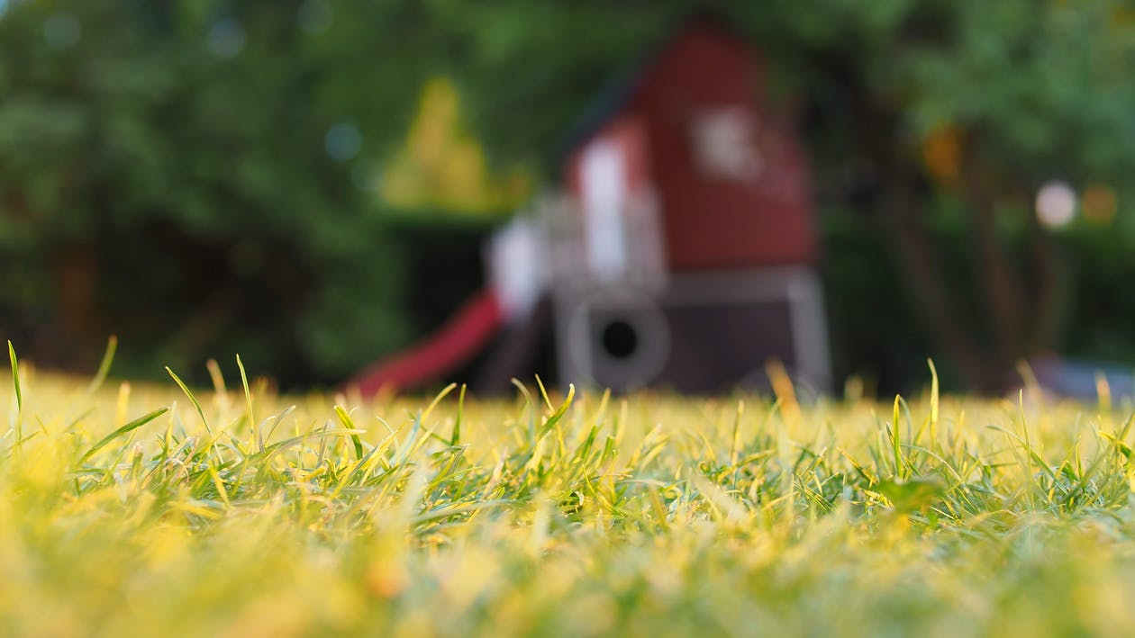 Selective Focus Photography of Grass