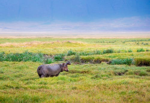 Fotobanka sbezplatnými fotkami na tému Afrika, divočina, divý, epos