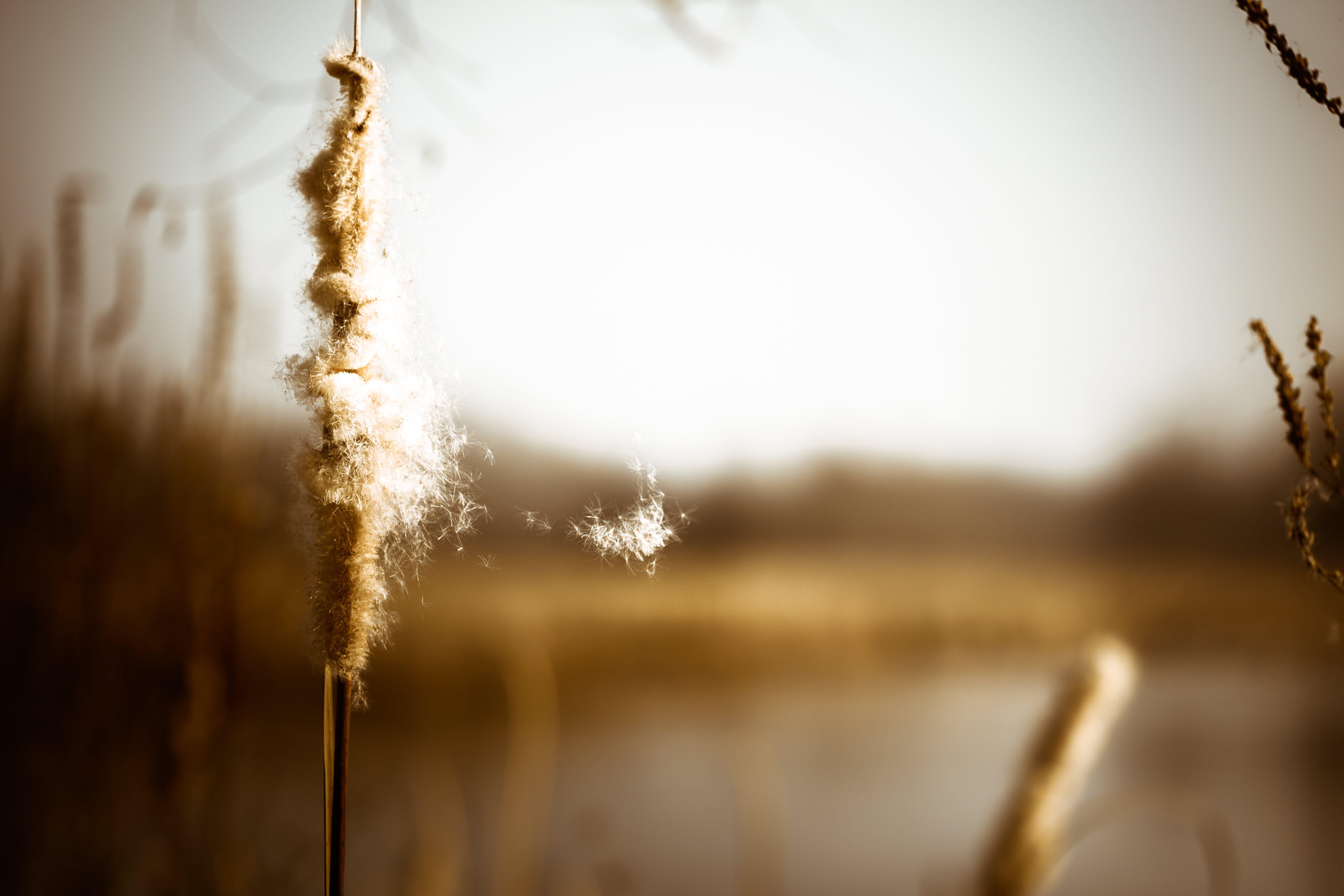 Free stock photo of nature, summer, hiking, fall