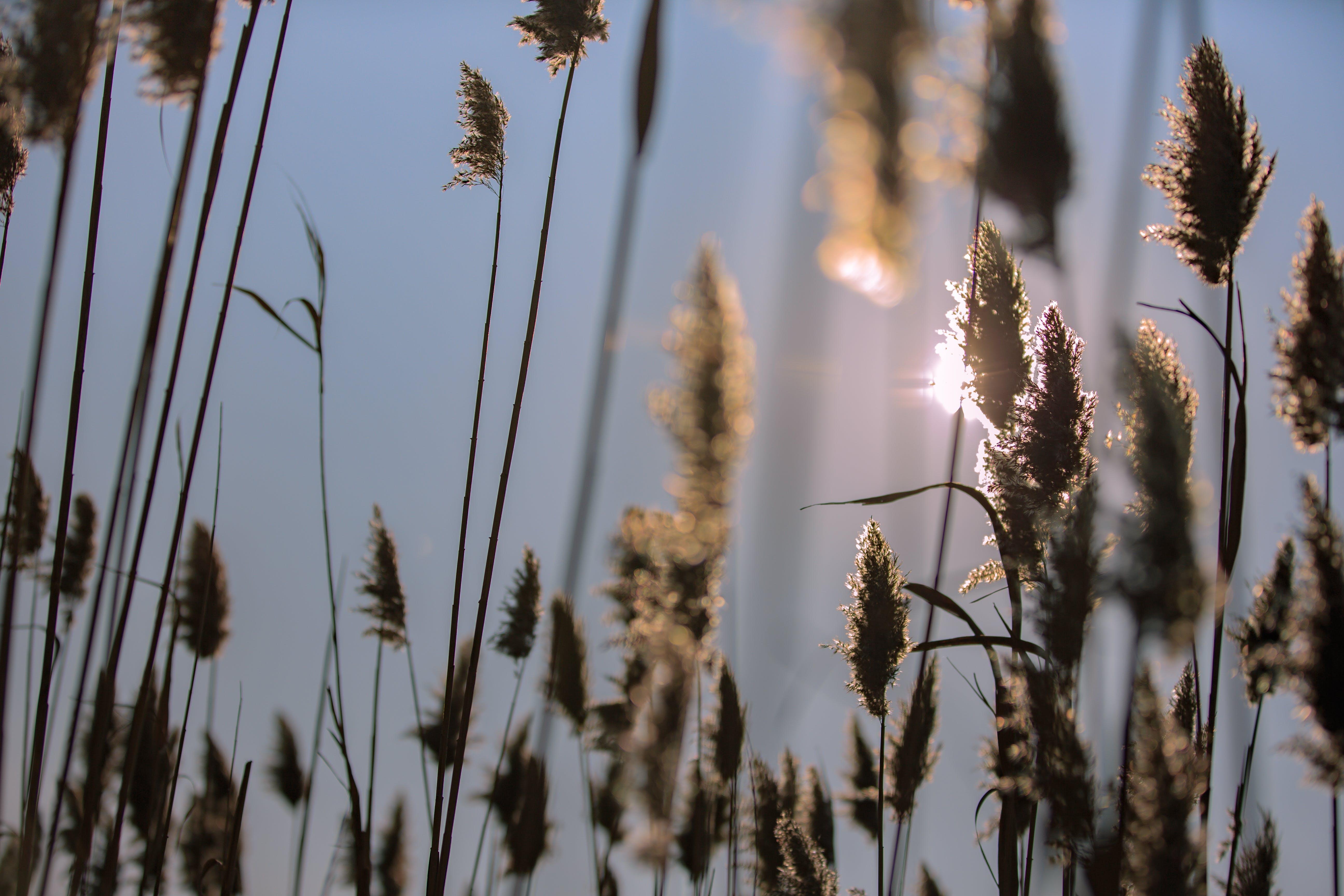 Free stock photo of landscape, love, milkweed, nature