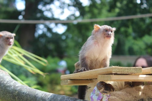Free stock photo of animal, nature