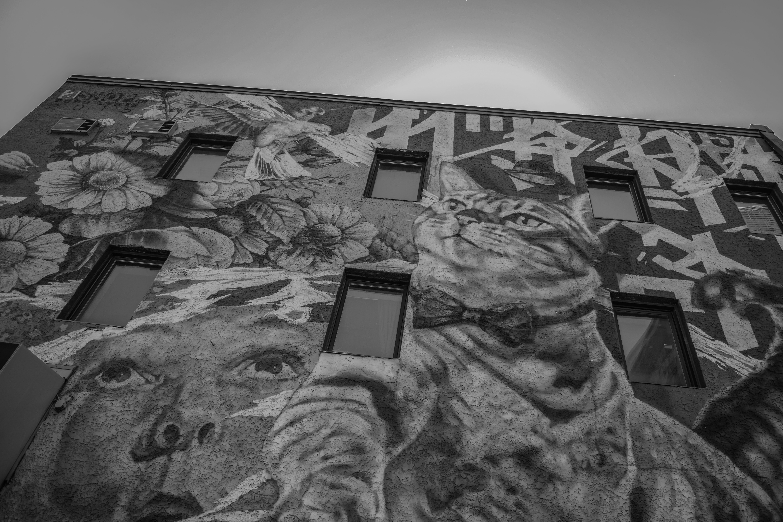 Free stock photo of artstic, black and white, colorful, graffiti