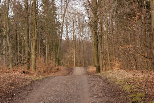 Free stock photo of forest, road, trees