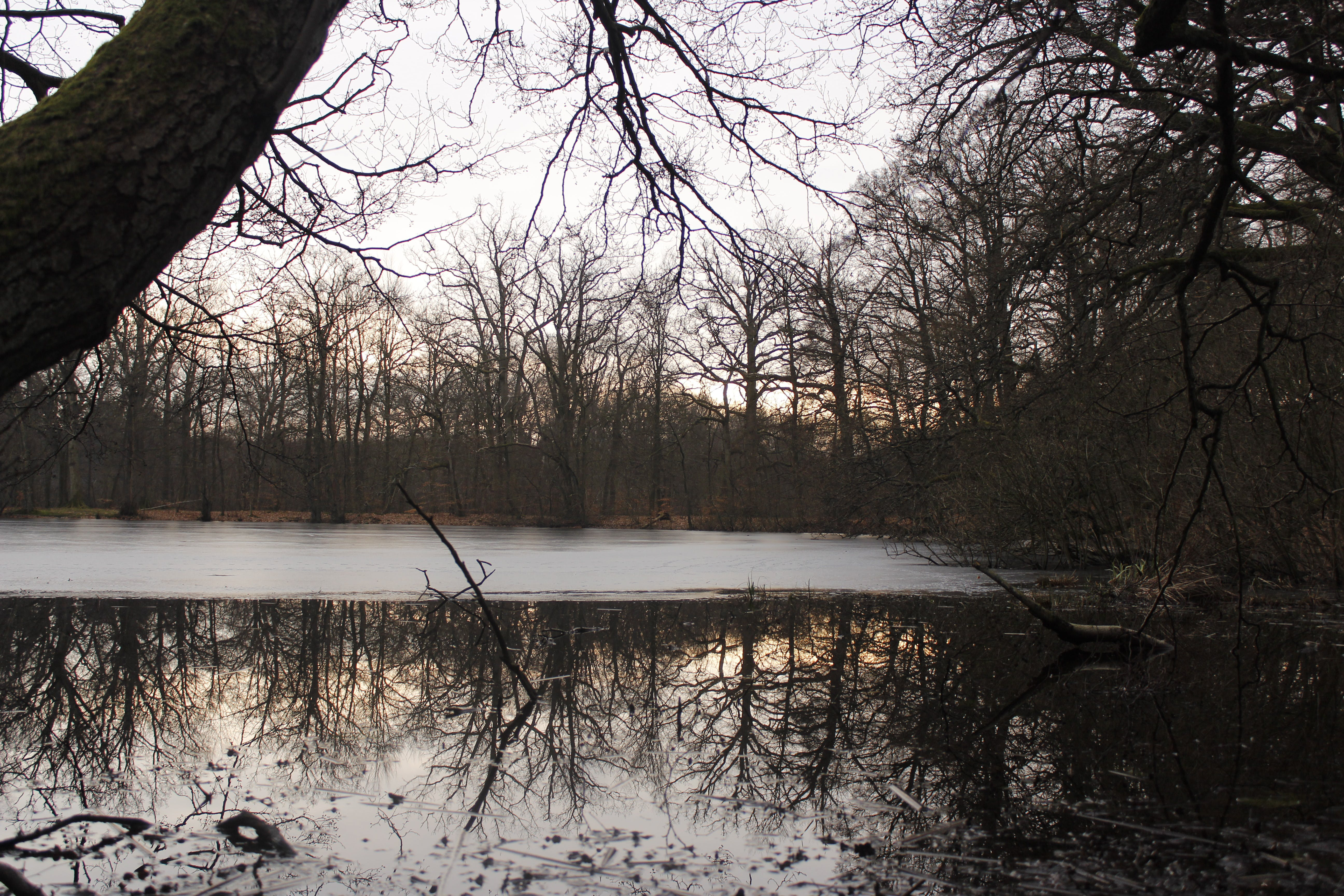 Free stock photo of forest, lake, nature, reflection