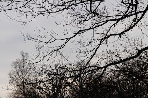 Free stock photo of branches, forest, nature