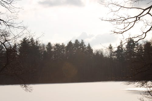 Free stock photo of ice, nature, trees