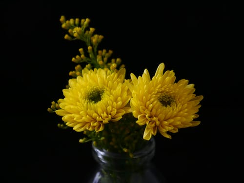 Бесплатное стоковое фото с ваза, желтый, красивый, лепестки