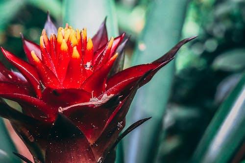 Fotografie bez autorských poplatků na téma barvy, flóra, jasný, kvetoucí