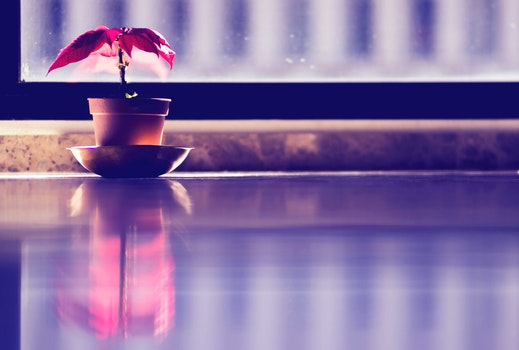 Free stock photo of red, plant, window, reflection