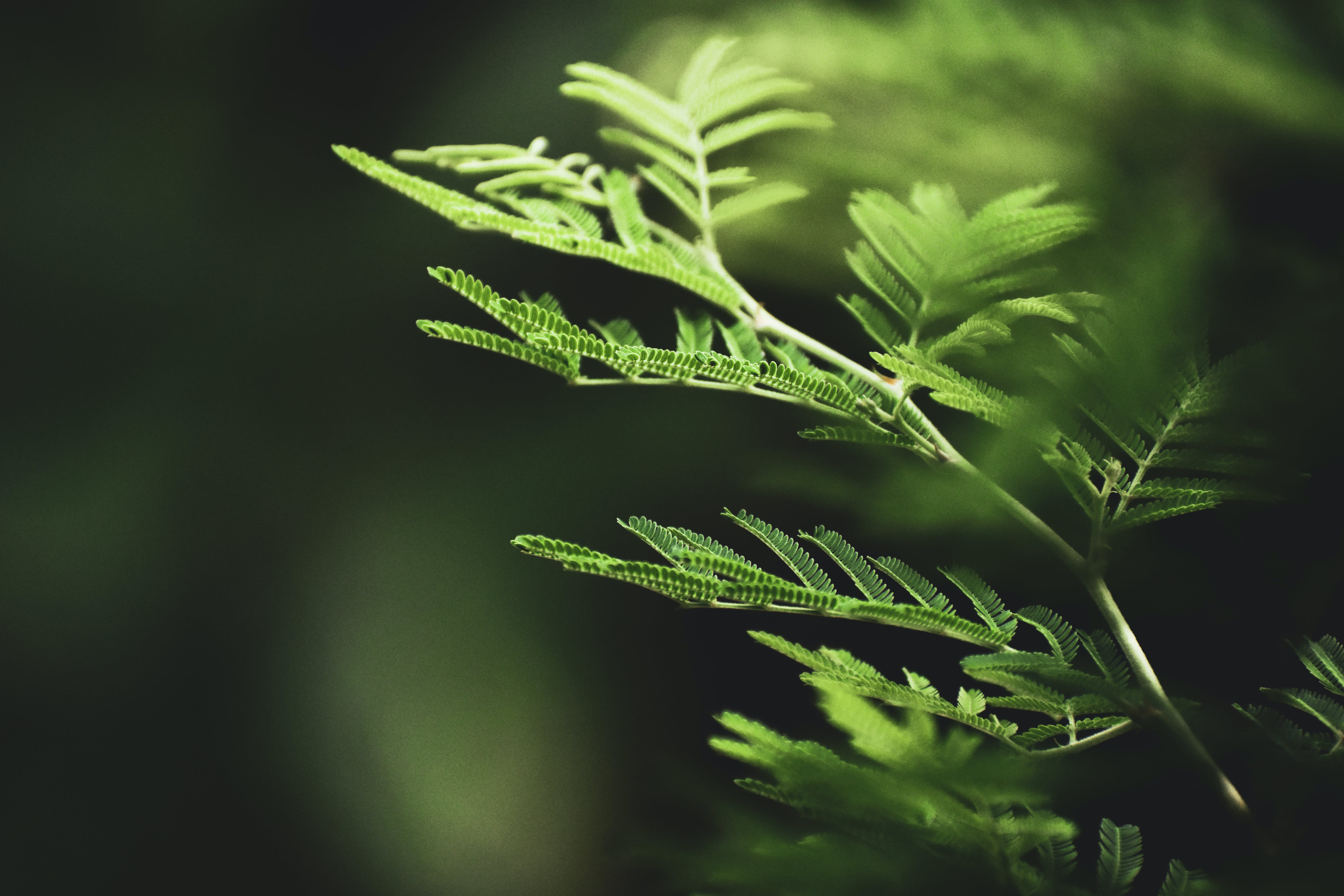 Selective Focus Photography of Fern Leaves