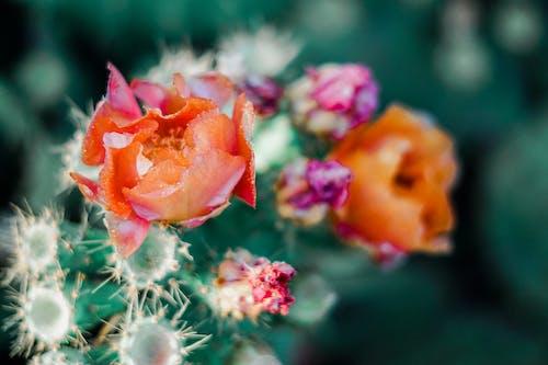 Darmowe zdjęcie z galerii z flora, jasny, kaktus, kolczasty