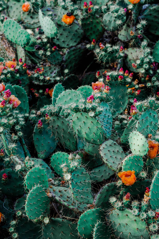 Photo of Orange and Pink Petaled Flowers on Cactus Plants