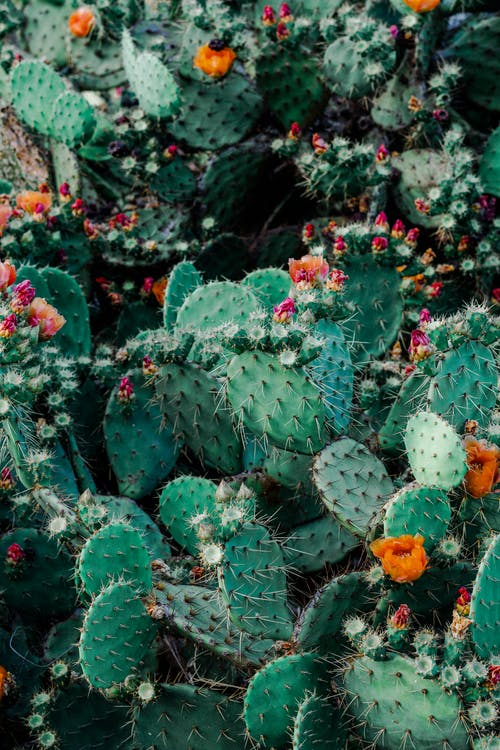 Photo of Orange and Pink Petaled Flowers on Cactus Plants