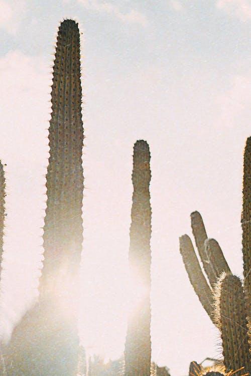 Fotobanka sbezplatnými fotkami na tému denné svetlo, jasný, kaktus, krajina