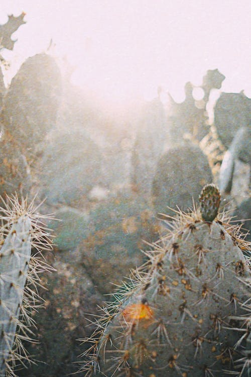 Closeup Photo of Green Cactus