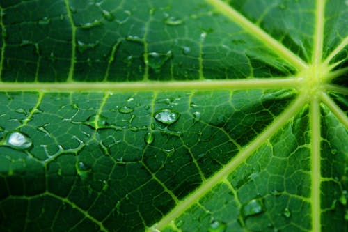 Foto profissional grátis de ecológico, folha verde, gota d'água, gotas d'água