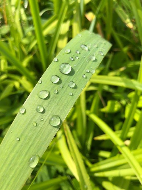 Free stock photo of green leaves, raindrop, summer