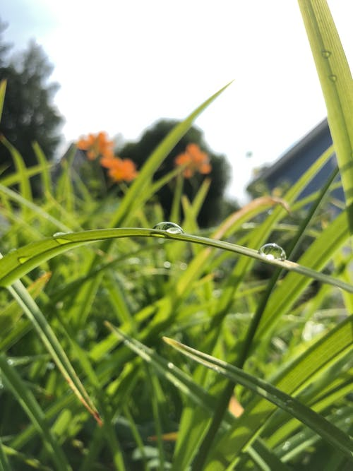 Free stock photo of green, raindrop, summer