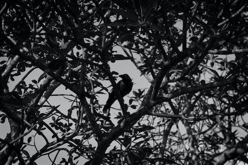 Foto profissional grátis de animal, assustador, corvo, escuro