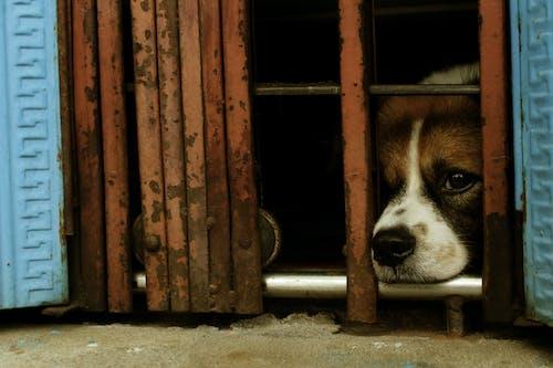 Foto profissional grátis de aborrecido, animal triste, aprisionado, cachorro