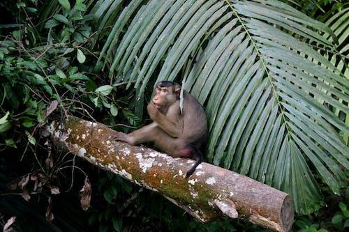 Foto profissional grátis de floresta, fotografia animal, galho de árvore, macaco
