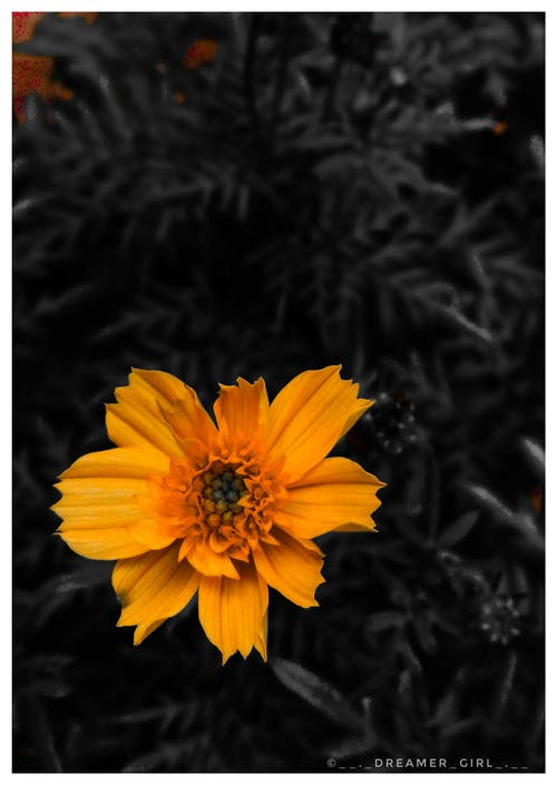 #orange #love #flower #lover #nature #lover #photo içeren Ücretsiz stok fotoğraf