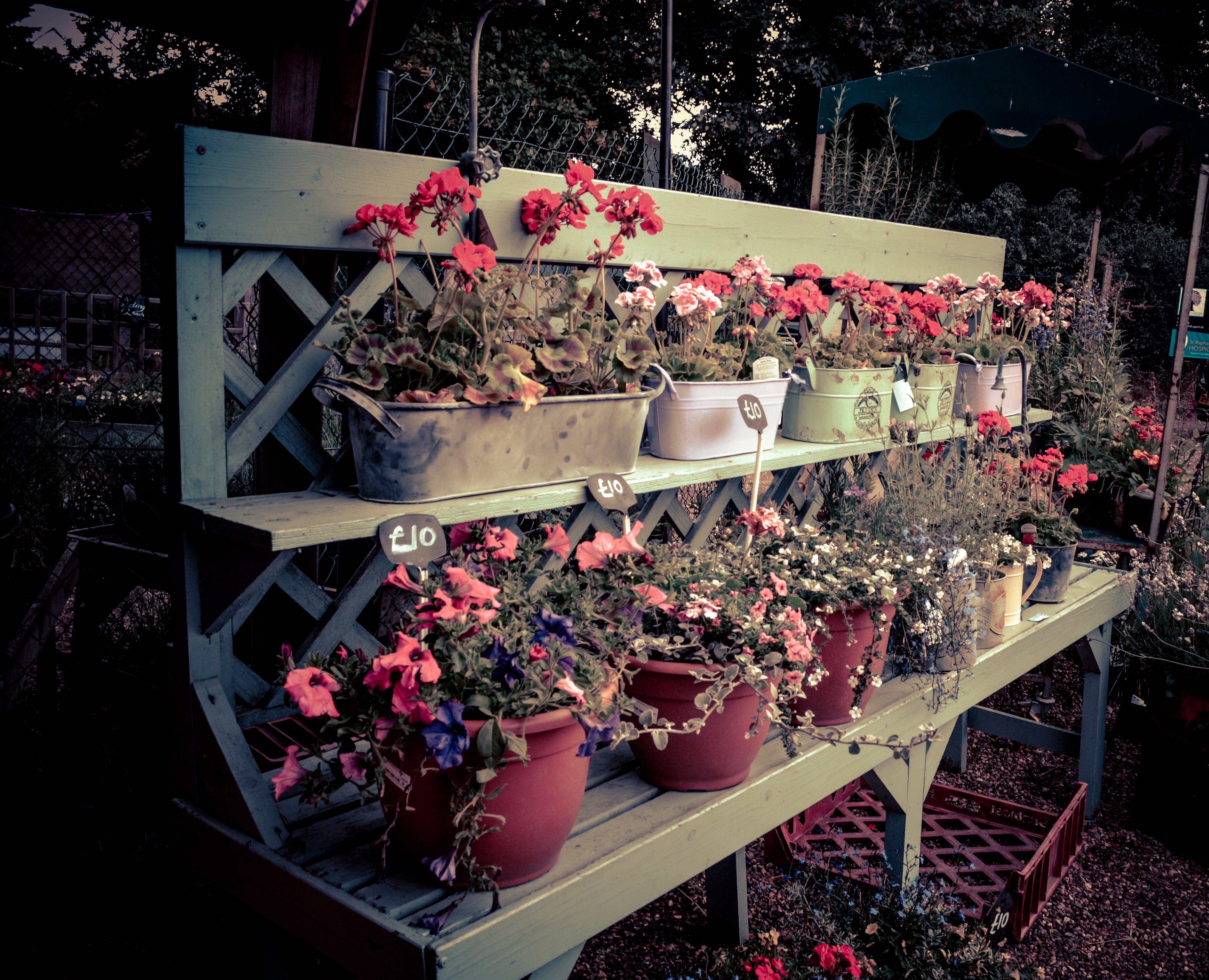 Free stock photo of beautiful flowers, flower arrangement, flowers, garden