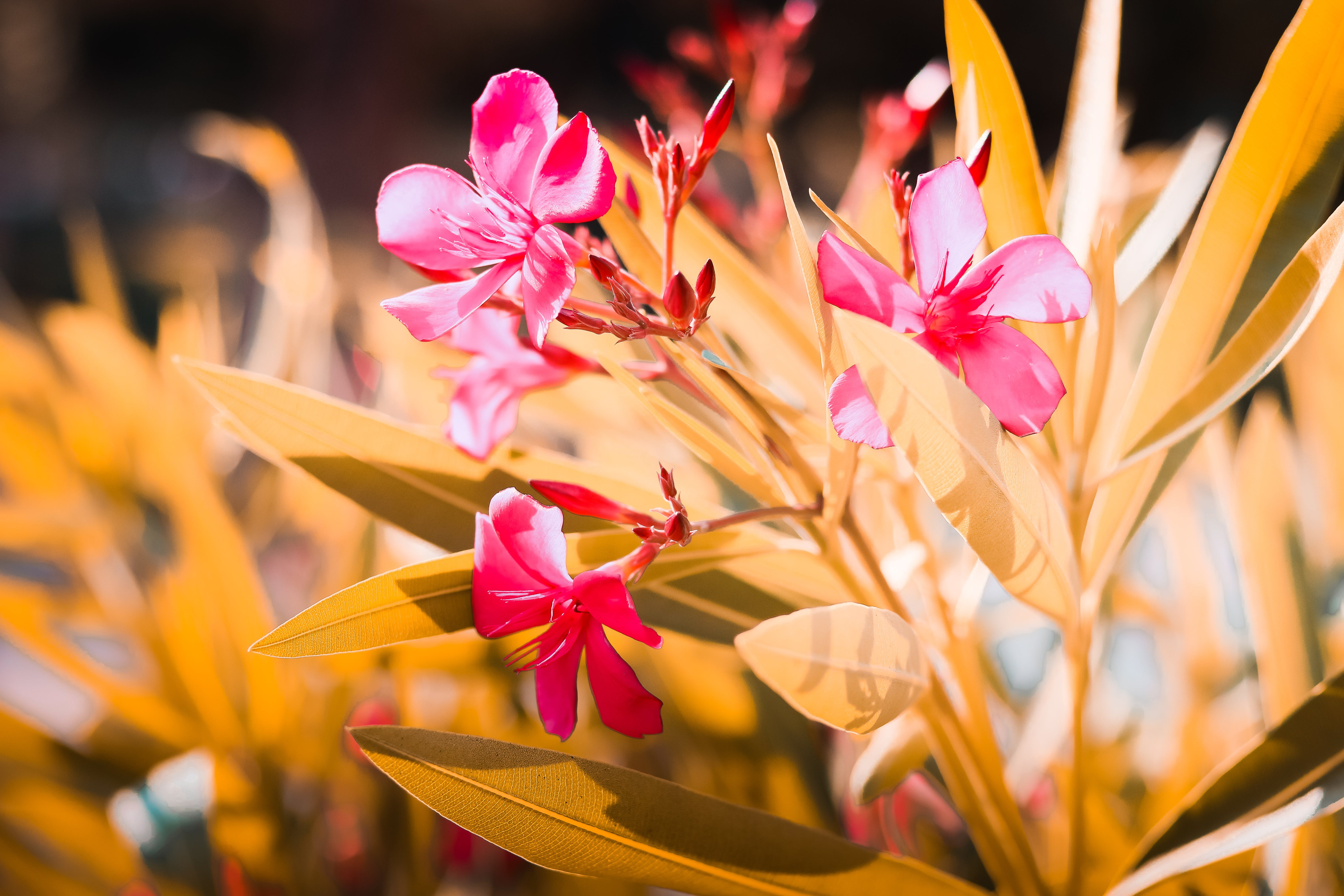 Tilt Shift Lens Photography Of Pink Petaled Flowers