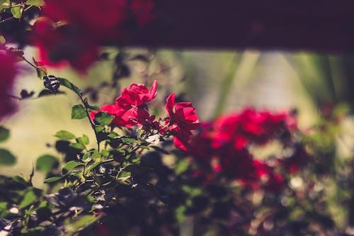 Gratis stockfoto met 4k achtergrond, bladeren, bloeien, bloeiend