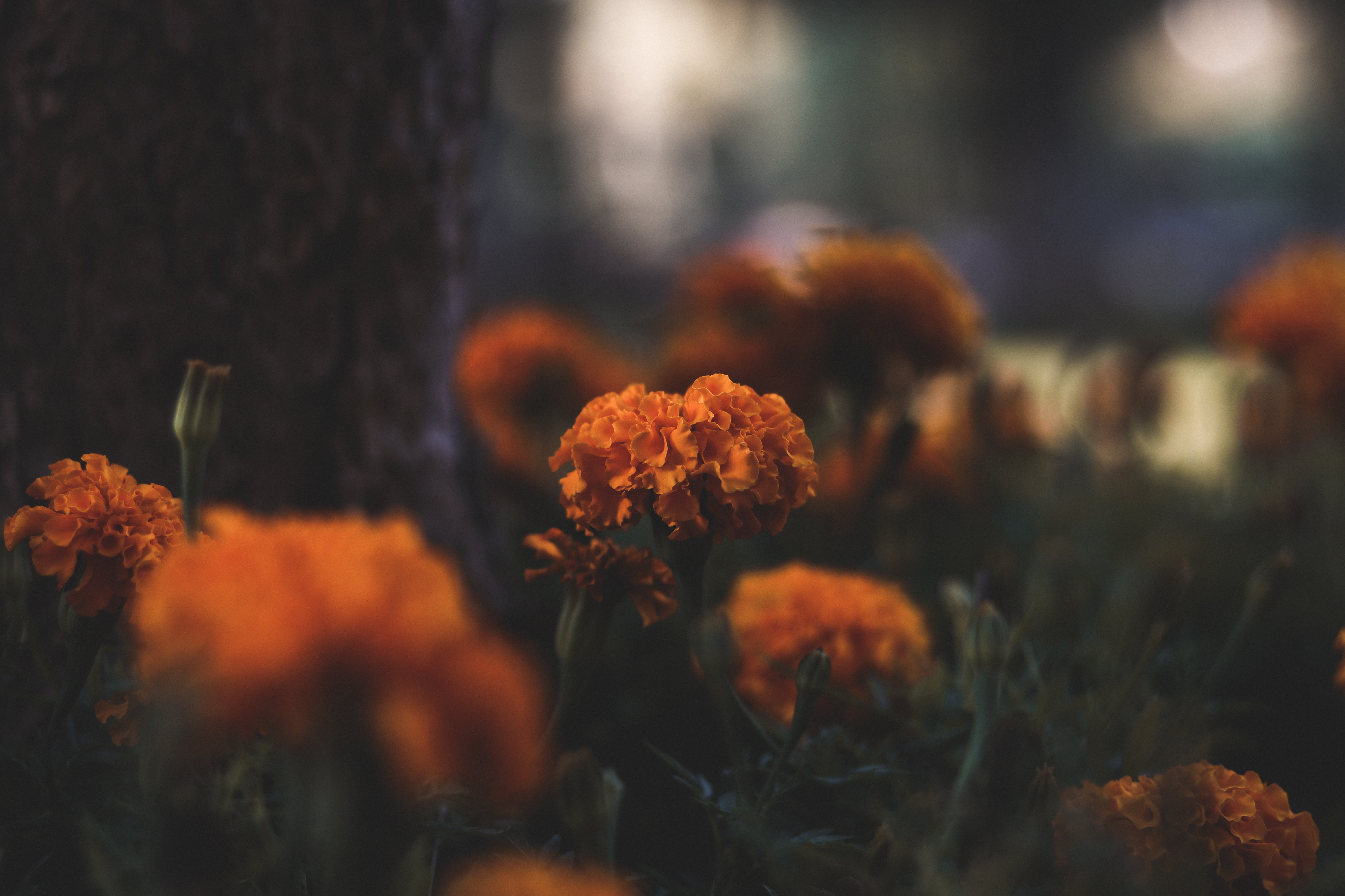 Selective Focus Photography of Orange Cluster Petaled Flowers