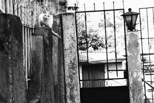 Základová fotografie zdarma na téma androx, černobílá, kočka, pozadí