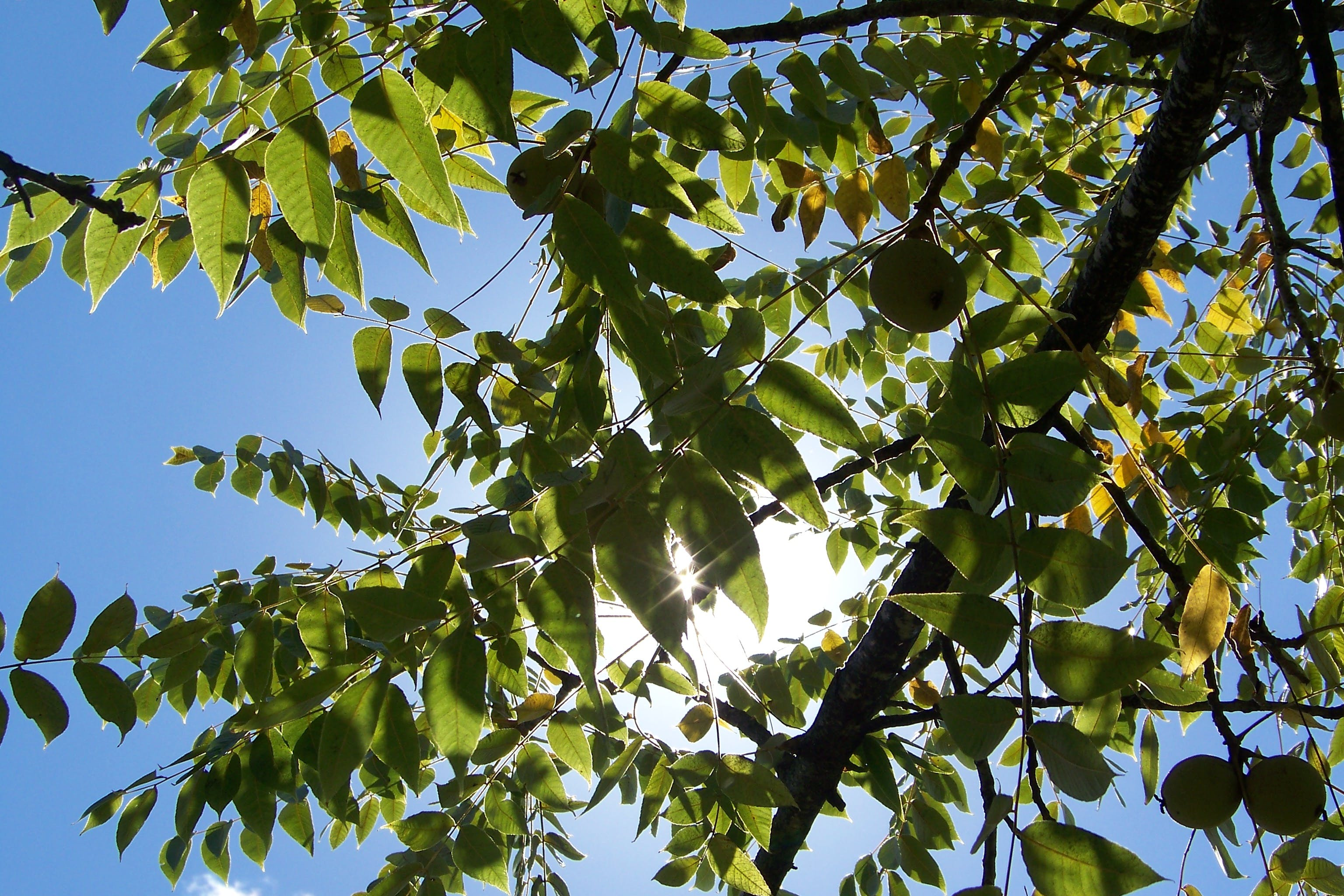 Low Angle Photography of Green Leafed Tree